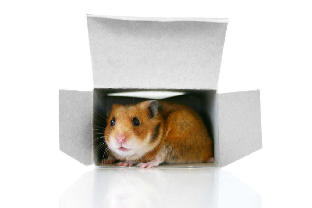 hamster dating